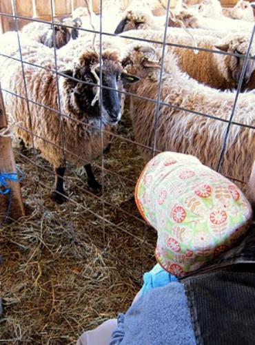 Sheep Shorn, Slippers Felted, Fellowship