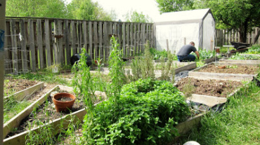 Garden Growing and Making Unleavened Bread
