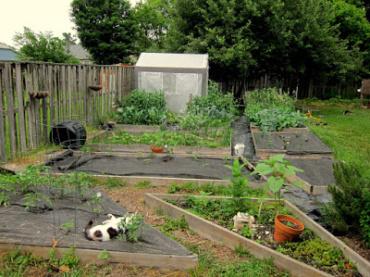 Over All the Garden