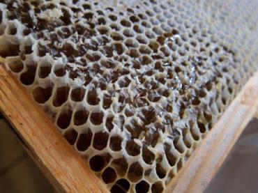 Around the Honey House