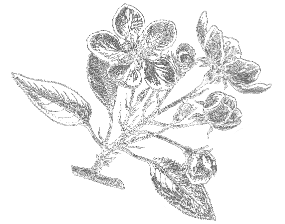 Essential Oils Natural Healthcare Herb Illustration