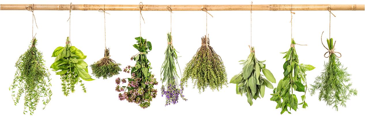 Essential Oils Herbs Hanging