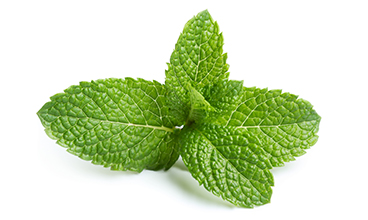 Essential Oils Peppermint Oil